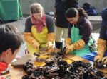 Cleaning scallops with the fishermen of Ishinomaki